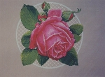 Center Stage Pink Rose - (Cross Stitch)
